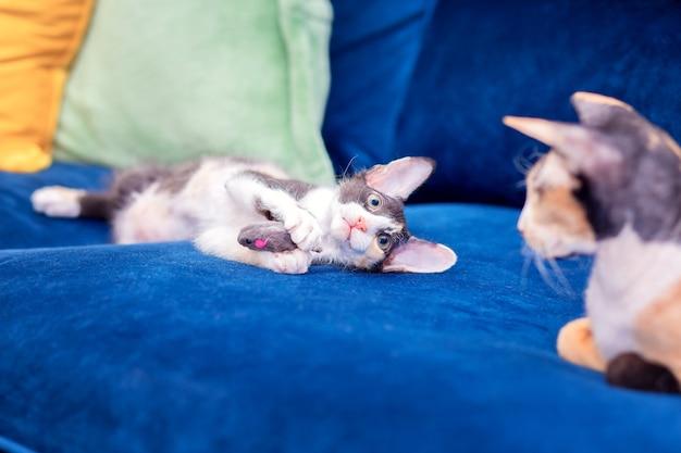 Трехцветный котенок играет с игрушечной мышкой. домашние кошки резвятся на диване