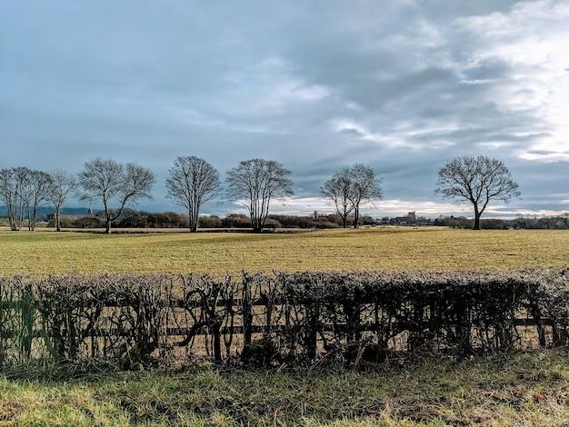Recinzione tagliata della siepe su un campo con alberi scoperti