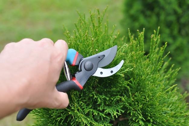 余分な木の枝をトリミングして削除する