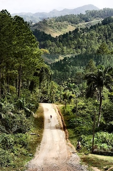 Trinidad landscape cuba road nature forest