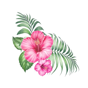 Tropic flowers isolated
