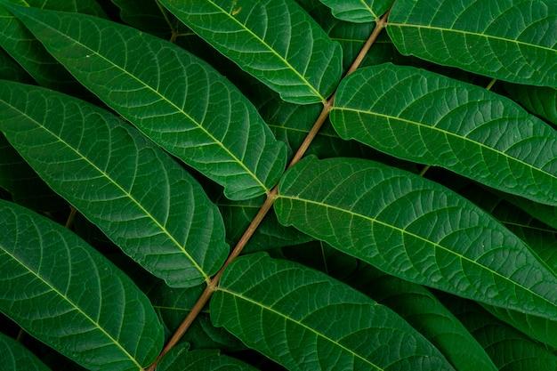 熱帯のジャングルの緑の葉静脈マクロの背景