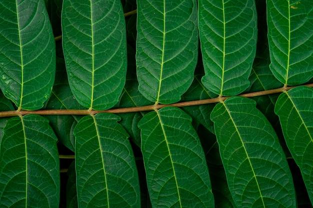 熱帯のジャングルの緑の葉脈マクロ壁