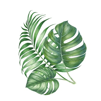 Tropic palm leaves composition.