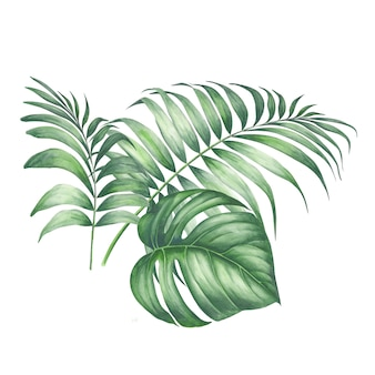 Tropic palm leaves.