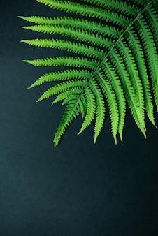 열 대 추상적 인 배경입니다. 아름 다운 고 사리 잎을 닫습니다. 평면도, 복사 공간