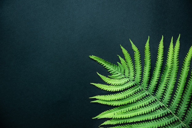 Tropical abstract background. beautiful fern leaf close up. top view, copy space