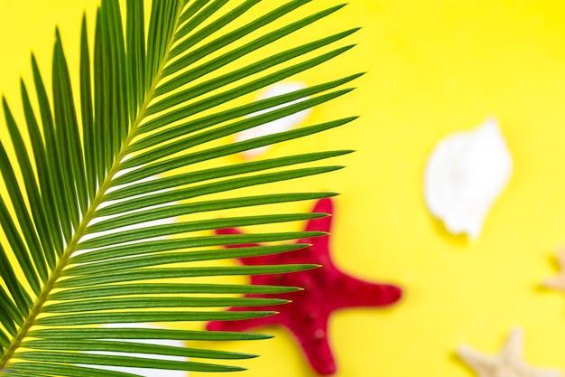 熱帯の背景黄色の背景にぼやけたヒトデとヤシの木の枝