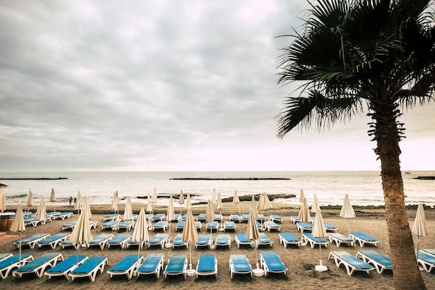ヤシとビーチの熱帯背景