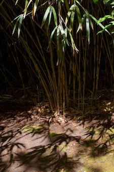 Foresta tropicale di bambù alla luce del giorno