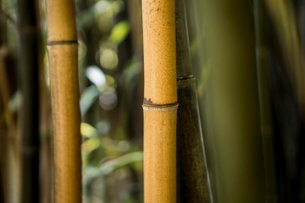 日光の下で熱帯竹林
