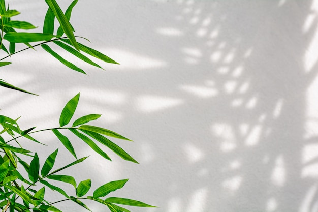 Tropical bamboo leaves and shadow on white concrete wall