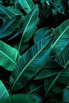 열 대 바나나 잎 질감 큰 야자수 단풍 자연 짙은 녹색 배경