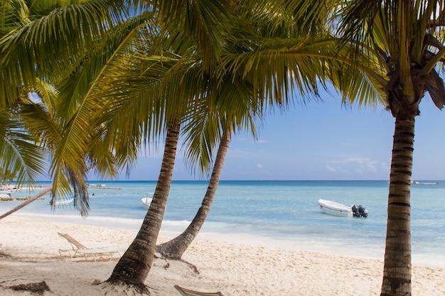 ドミニカ共和国、プンタカナの熱帯のビーチ