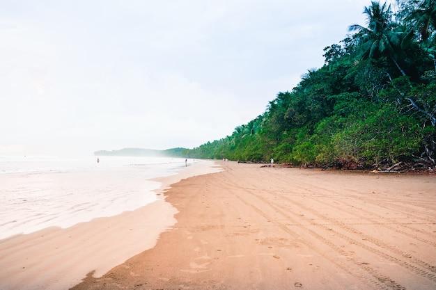 야자수로 둘러싸인 바람이 부는 날에 열대 해변