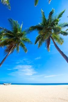 スリランカの熱帯のビーチ。観光のための夏休みと休暇の概念。