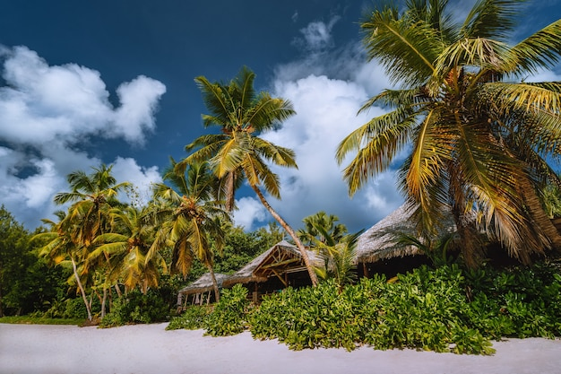 Tropical beach landscape with coconut palm trees and straw roofs. paradise exotic vacation holidays.