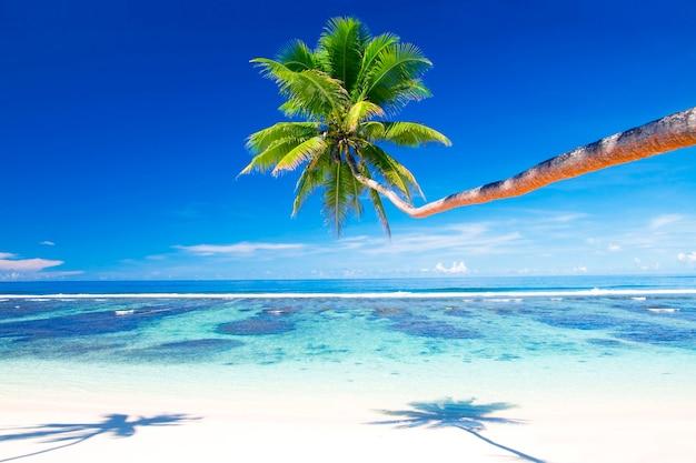 サモアの熱帯のビーチ