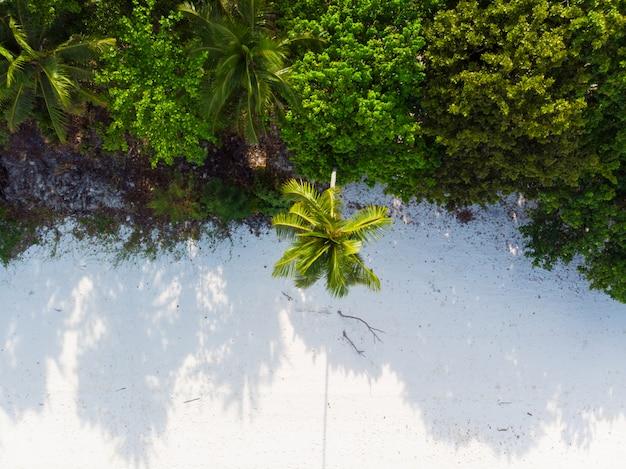 Tropical beach palm frond caribbean sea at pasir panjang. indonesia moluccas archipelago, kei islands, exotic travel destination.