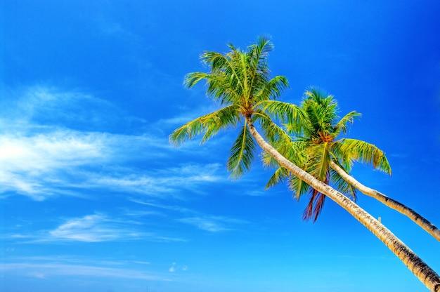 푸른 하늘 위에 코코넛 야자수와 열 대 해변 풍경입니다. 보라카이 섬, 필리핀