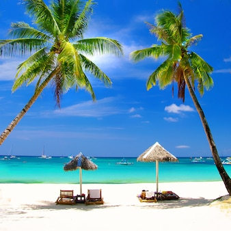 Tropical beach scenery with coconut palm trees and turquoise sea. boracay island, philippines