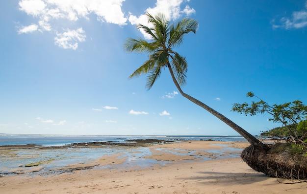 Tropical beach with coconut trees on the island of boipeba in bahia brazil.