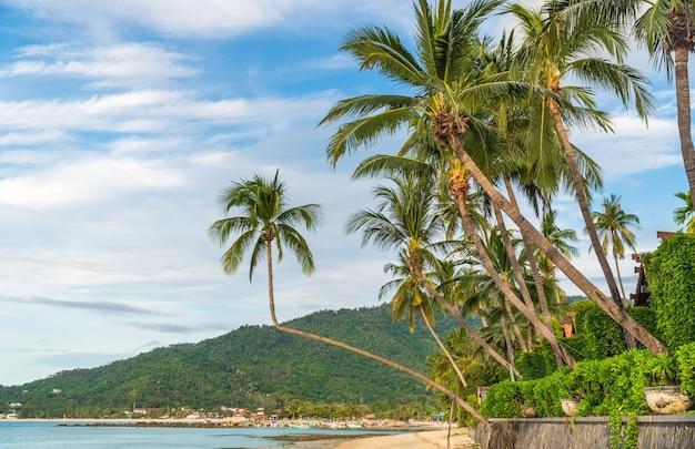 코코넛 나무가 있는 열대 해변. 코사무이, 태국