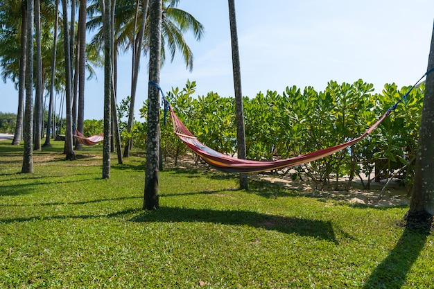 Tropical beach with hammock under the palm trees in sunlight