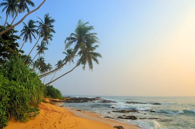 Тропический пляж с пальмами на экзотическом острове