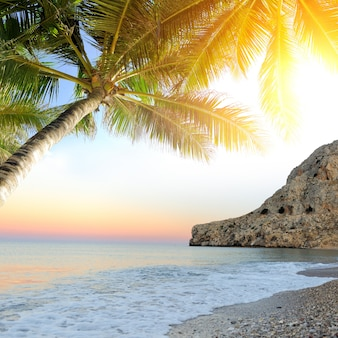 Tropical beach with palm tree. beautiful tropical landscape