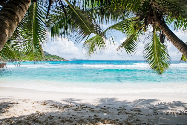 Tropical beach with palm trees, crystal water and white sand