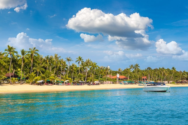Tropical beach with palm trees on koh samui island, thailand