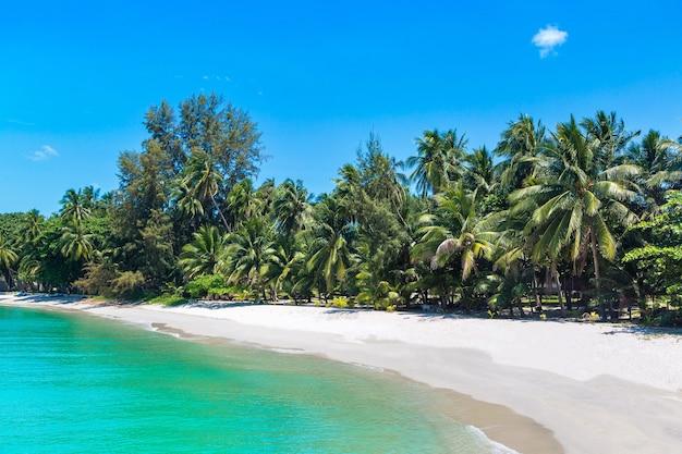 Тропический пляж с пальмами на острове самуи