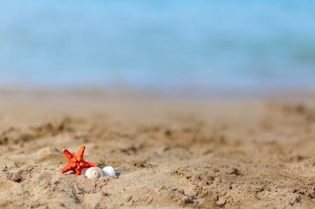 모래에 바다 별이 있는 열 대 해변, 텍스트에 대 한 copyspace. 여름 휴식 여행, 복사 공간의 개념