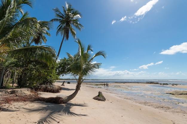 Boipeba 섬 바이아 브라질에 경 사진 코코넛 야자수와 열 대 해변.