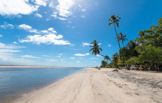 Тропический пляж с наклонными кокосовыми пальмами на острове бойпеба, баия, бразилия.