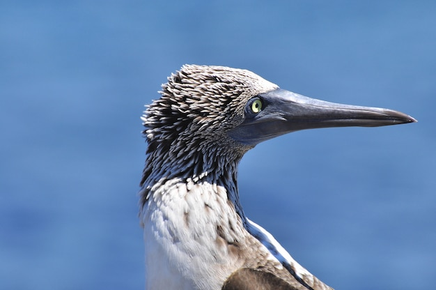 Tropical bird in natural environment