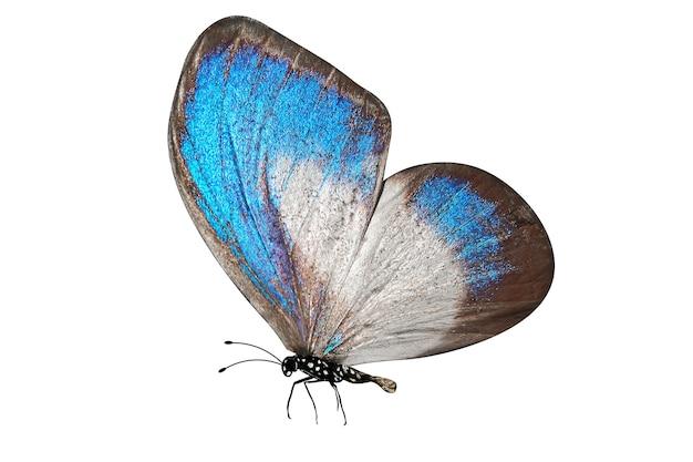 열 대 푸른 나비. 흰색 배경에 고립