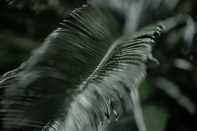 テクスチャード加工された葉を持つヤシの木の熱帯の枝。暑い気候における植生の概念。