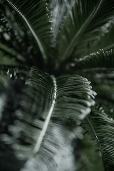 Tropical branches of palm trees with textured leaves. vegetation concept in hot climates.