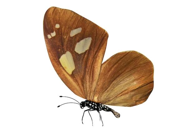白い背景で隔離の熱帯茶色の蝶