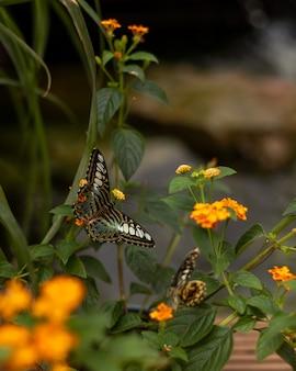 자연 환경에서 열대 나비