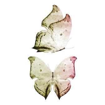 孤立した熱帯蝶