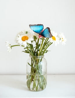 Tropical butterfly morpho sits on a white flower in a bouquet of large daisies and gerberas