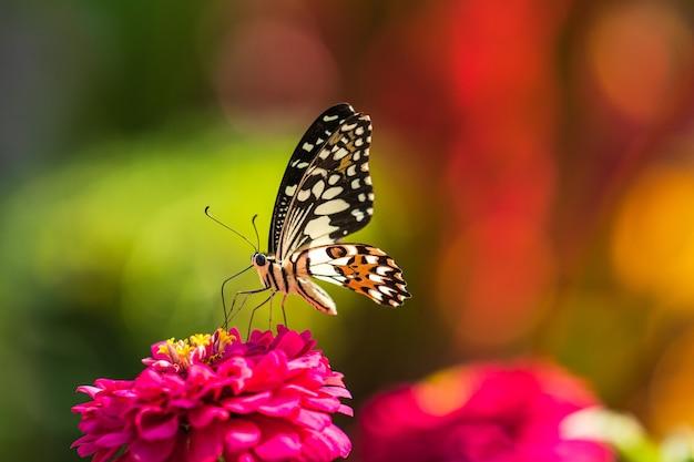 꽃에 열 대 나비, 매크로 촬영, 나비 정원
