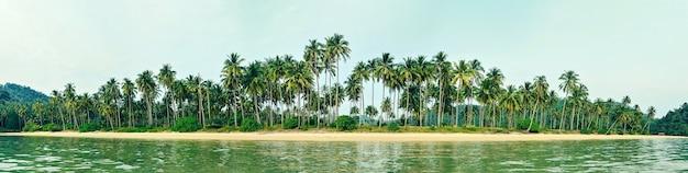 ヤシの木と熱帯植物のある熱帯の海岸、砂浜の空の野生のビーチ