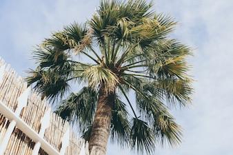青い空に熱帯のココナッツ椰子の木