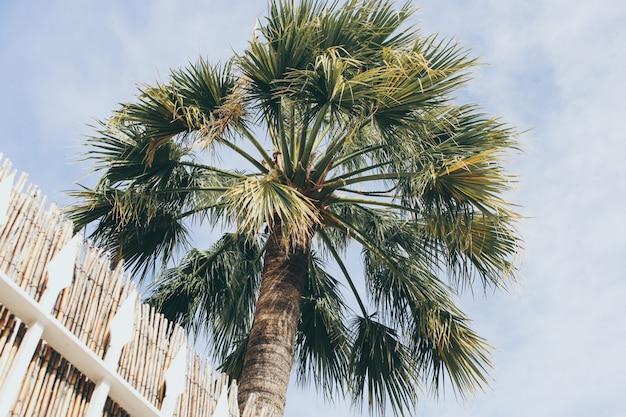 푸른 하늘에 열 대 코코넛 야 자 나무