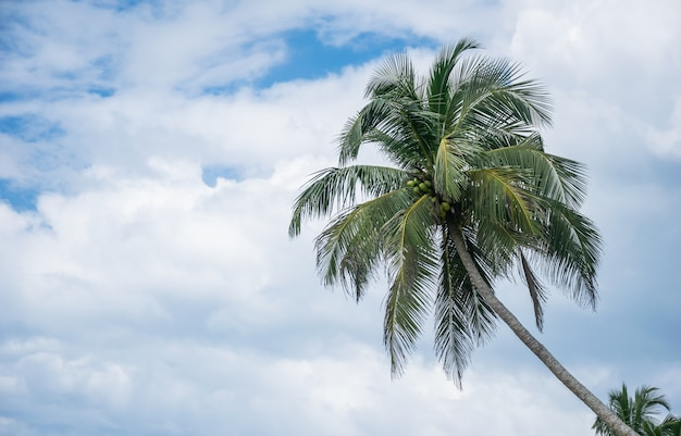 Tropical coconut palm tree with blue sky and cloud background on the beach with copy space for your text
