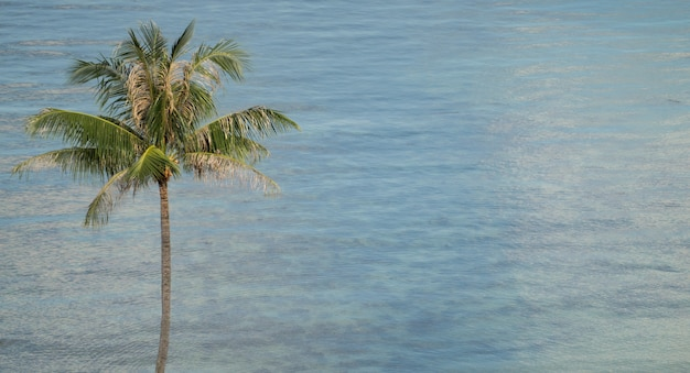 Tropical coconut palm trees over blue ocean